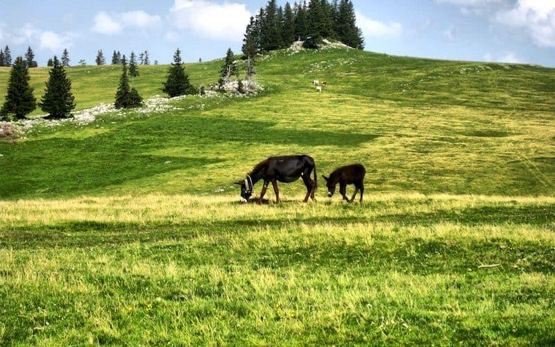 Vlašić - Čudesna planina za koju smo svi vezani!