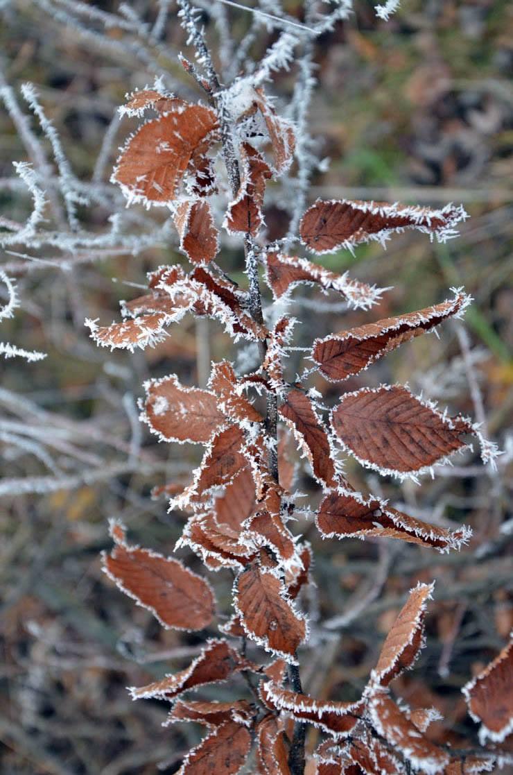 Kroz Likin objektiv - Zamrznuti u vremenu (FOTO)