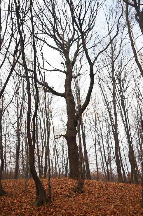 Kroz Likin objektiv/ Šumska terapija