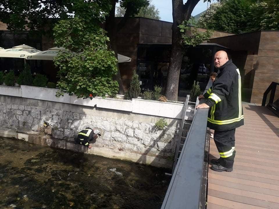 Još jednom oduševili građane / Travnički vatrogasci iz Lašve spasili mačku